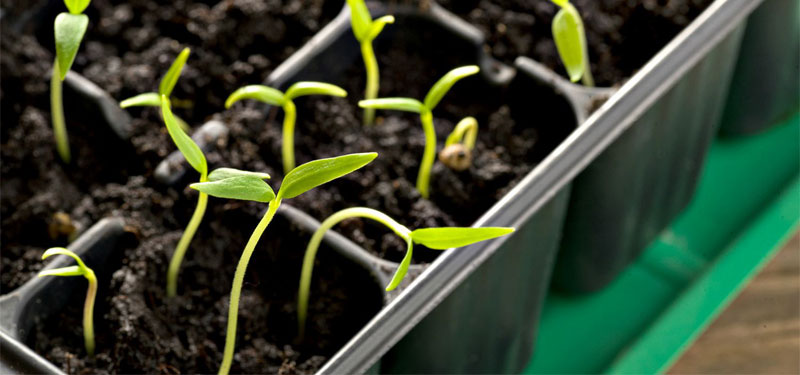 10k seedlings to make BBSR green again
